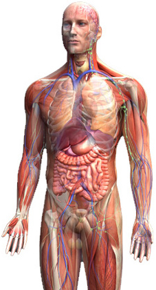 anatomy courses online and distance learning