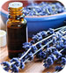 aromatherapy massage courses
